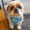 Best Shih Tzu by We Pets - Model