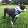 Best Boston Terrier by We Pets - Model