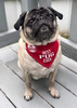 Best Pug by We Pets - Model