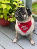 Best Pug by We Pets - Model2